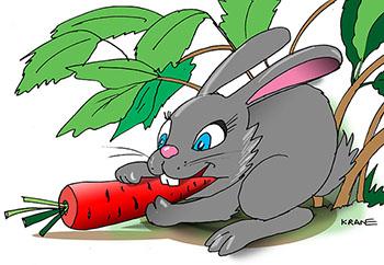 Картинки заяц под кустом